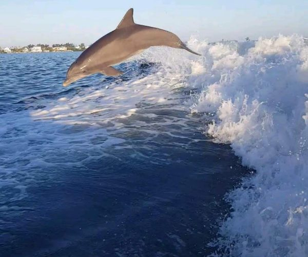 anna-maria-island-salty-dolphin-tours